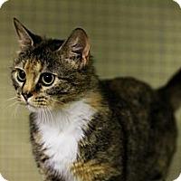 Adopt A Pet :: Sammy - Mission, BC