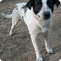 Adopt A Pet :: Jazzy (Reduced Adoption Fee) - Brattleboro, VT