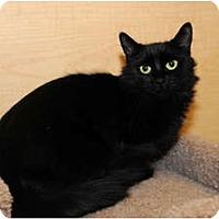 Adopt A Pet :: Pandora - Farmingdale, NY