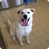 Adopt A Pet :: Olaf - Oak Brook, IL