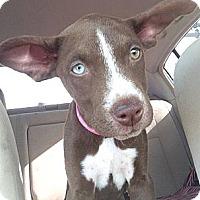 Adopt A Pet :: Lisa - Scottsdale, AZ