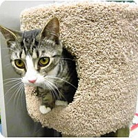 Adopt A Pet :: Deanie - Warminster, PA