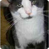 Adopt A Pet :: Hank - Strathmore, AB