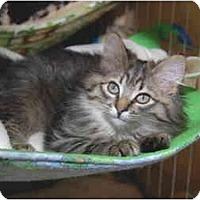 Adopt A Pet :: Kit Kat - Colmar, PA