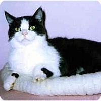 Adopt A Pet :: Jeffrey - Medway, MA