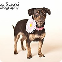 Adopt A Pet :: Willa - Los Angeles, CA