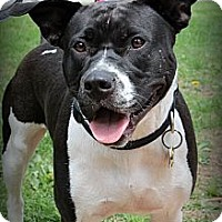 Adopt A Pet :: Lucy - Sinking Spring, PA