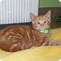 Adopt A Pet :: Dijan - Dover, OH