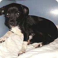 Adopt A Pet :: Nera - Orlando, FL