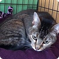 Adopt A Pet :: Lexi - Ardsley, NY