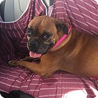 Adopt A Pet :: Athena - Austin, TX