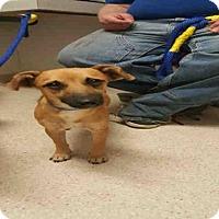 Adopt A Pet :: *WILBER - Bakersfield, CA
