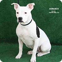 Adopt A Pet :: LULU - Hanford, CA
