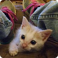 Adopt A Pet :: Bubba - Armuchee, GA