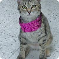 Adopt A Pet :: Amelia - Chambersburg, PA