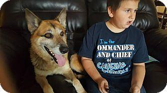 German Shepherd Dog Mix Dog for adoption in Salem, Oregon - Nick