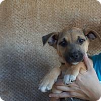 Adopt A Pet :: Marla - Oviedo, FL