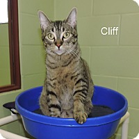 Adopt A Pet :: Cliff - Slidell, LA