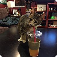 Adopt A Pet :: Stan - Chicago, IL
