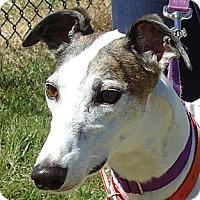 Adopt A Pet :: TJ Philharmonic - Longwood, FL