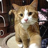 Adopt A Pet :: Heath - Byron Center, MI