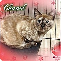 Adopt A Pet :: Chanel - Washington, DC
