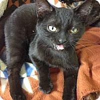 Adopt A Pet :: Shauna - Byron Center, MI