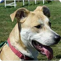 Adopt A Pet :: Fella - Marysville, OH