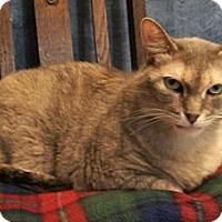 Adopt A Pet :: Flora Jean - Lenexa, KS