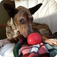 Adopt A Pet :: Manny - Saskatoon, SK