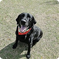 Adopt A Pet :: Zeke - Cantonment, FL