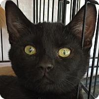 Adopt A Pet :: Blackout - Winchester, CA