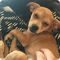 Adopt A Pet :: Fiona - Leduc, AB