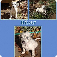 Adopt A Pet :: River Adoption pending - Manchester, CT
