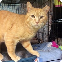 Adopt A Pet :: Jeremy - East Brunswick, NJ