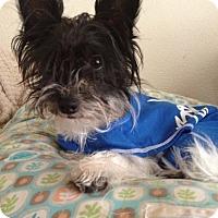 Adopt A Pet :: Worf - Las Vegas, NV