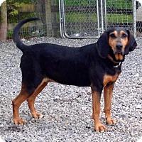 Adopt A Pet :: Melody - Bakersville, NC