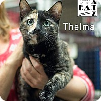 Adopt A Pet :: Thelma - Albuquerque, NM