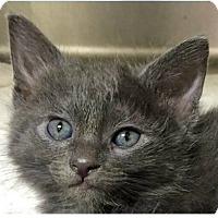 Adopt A Pet :: Jax - Springdale, AR
