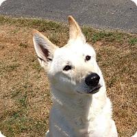 Adopt A Pet :: Mabel May - Pending Adoption - Gig Harbor, WA