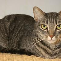Adopt A Pet :: Pecan - Canoga Park, CA
