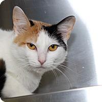 Adopt A Pet :: Rosaline - Sarasota, FL