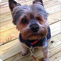 Adopt A Pet :: One-Eyed Jack - Whiting, NJ