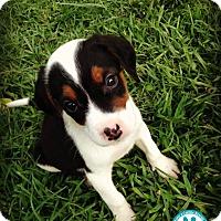 Adopt A Pet :: Weston - Kimberton, PA