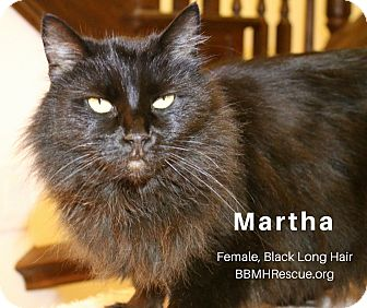 Domestic Longhair Cat for adoption in Temecula, California - Martha