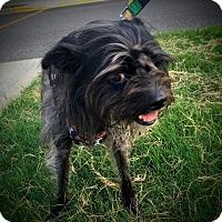 Adopt A Pet :: Mindy - Memphis, TN
