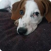 Adopt A Pet :: Petey - Alden, NY