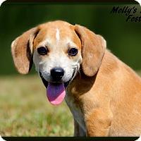Adopt A Pet :: Foster - Dixon, KY