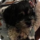 Adopt A Pet :: Toby:GENTLE sweet boy (TN)