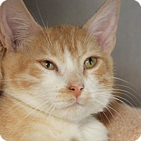Adopt A Pet :: Thor - Hawthorne, CA